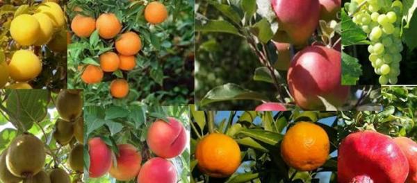 Da ottobre in vendita anche le piante da frutto for Piante da orto vendita online